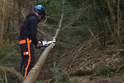 chainsaw tree cutting