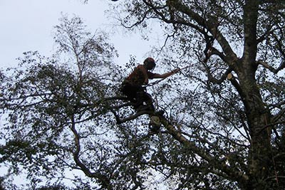 tree climbing and chainsaw training